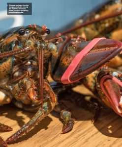 A lobster package from the company includes not only the shellfish, but lemon, butter, crackers and dining accessories as well.
