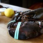 How Far Do Lobsters Travel? ...And Everything You've Ever Wondered About Lobsters!