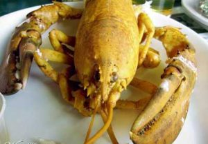 yellow lobster colors